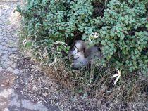 Pyrenäenberghund Wally im Februar 2021