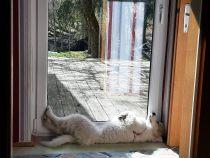 Pyrenäenberghund Wilma im Februar 2021
